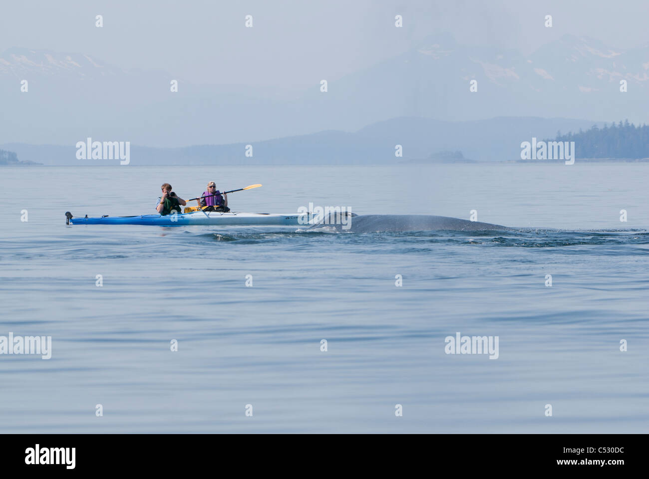 Humpback whale surfaces near sea kayakers in Frederick Sound, Inside Passage, Southeast Alaska, Summer Stock Photo