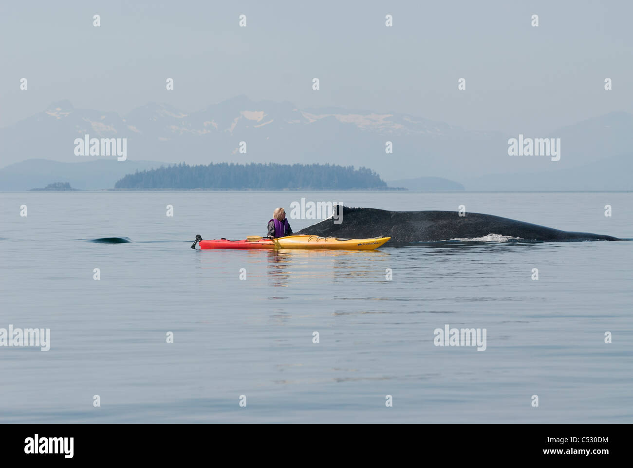 Humpback whale surfaces near a woman sea kayaker in Frederick Sound, Inside Passage, Southeast Alaska, Summer Stock Photo