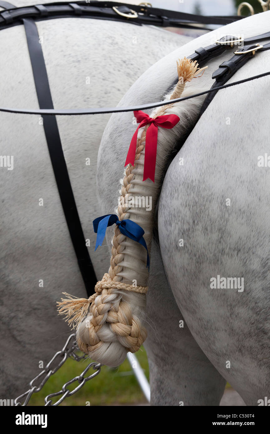Plaited tail of a draught horse in harness - Stock Image