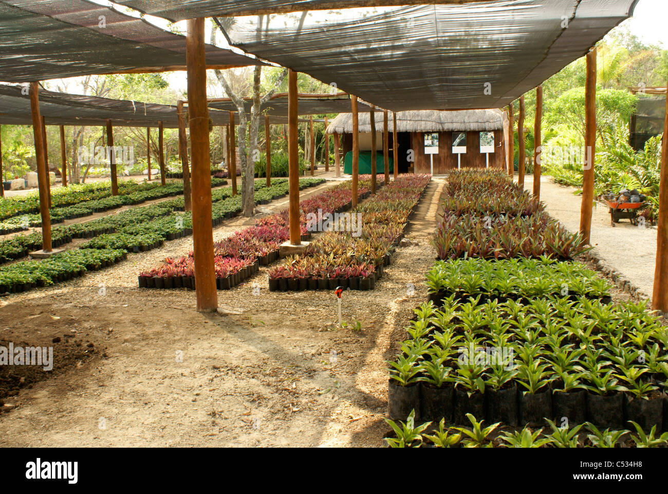 Plant Nursery Stock Photos & Plant Nursery Stock Images - Alamy