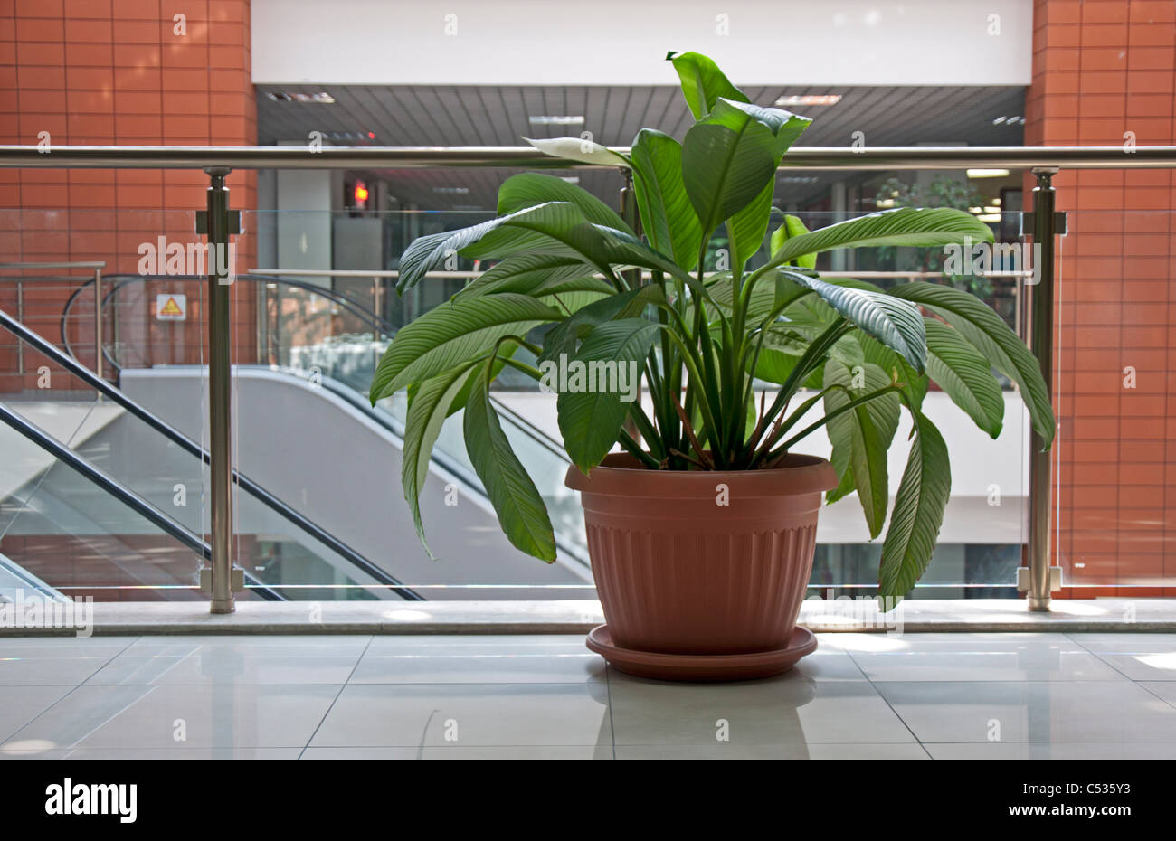 office flower pots. Office Plants. Flower Pot In Building Pots