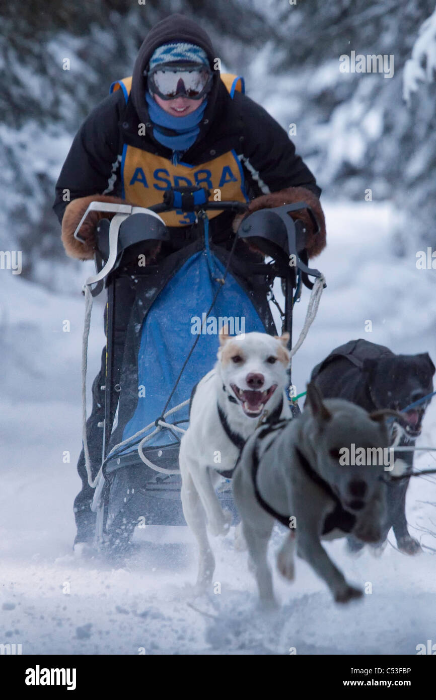 Musher racing in the Lake Memorial Race, Tozier Track, Anchorage, Southcentral Alaska, Winter - Stock Image