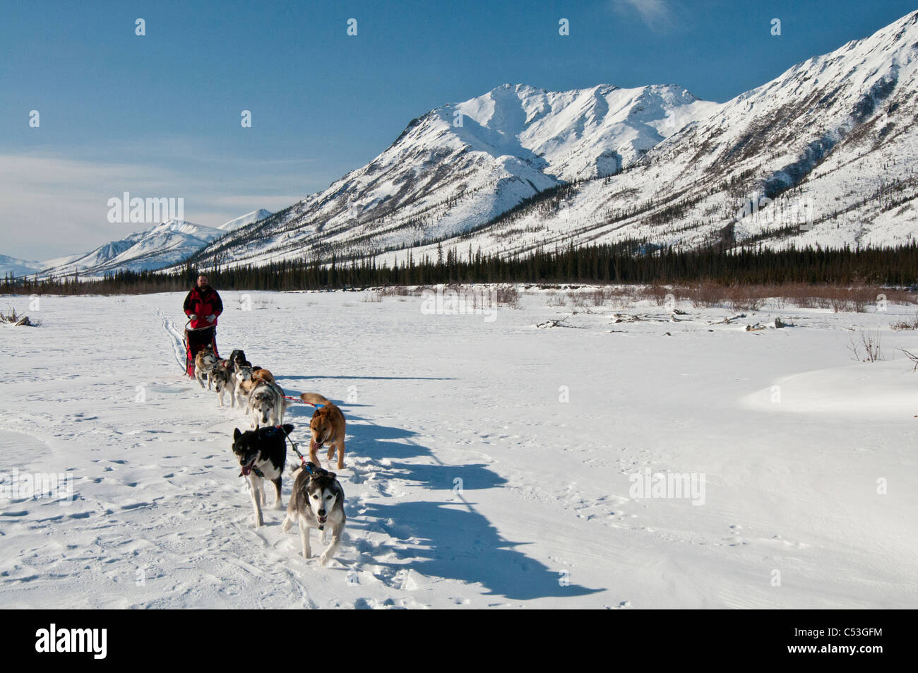 A musher takes his team up the North Fork of the Koyukuk River in Gates of the Arctic National Park , Alaska - Stock Image