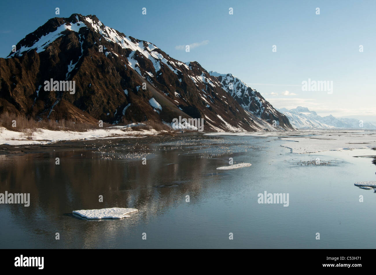 Spring ice and thousands of gulls gather on the Copper River near Flag Point, Chugach National Forest, Alaska, Spring - Stock Image