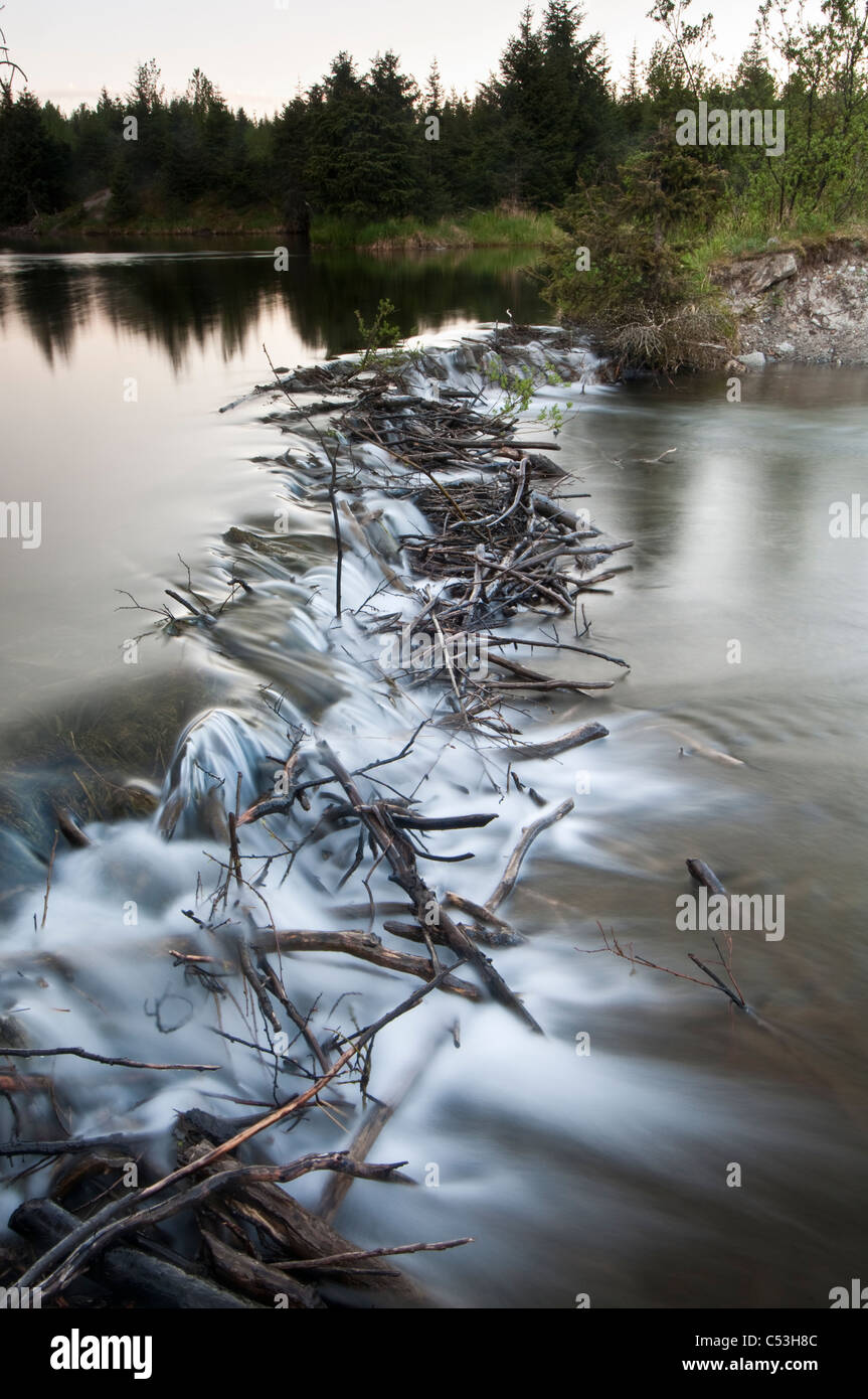 View of a beaver dam slowing the flow of water from a stream into Mendenhall Lake,  Juneau, Alaska - Stock Image