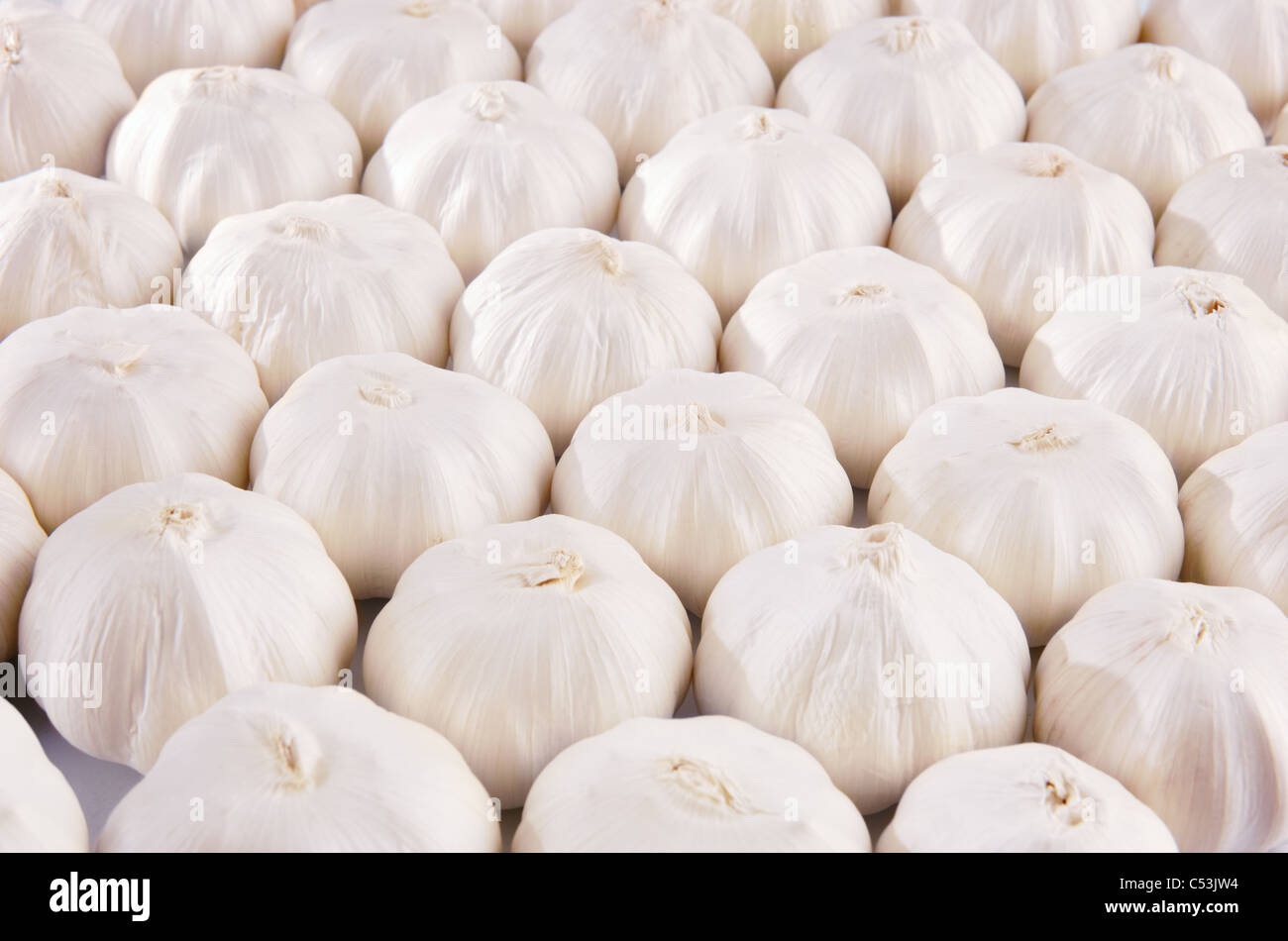 Background with lots of garlic bulbs - Stock Image