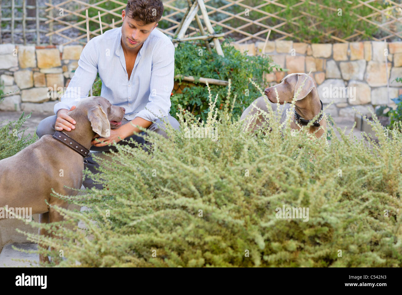 Man sitting with dogs in garden Stock Photo