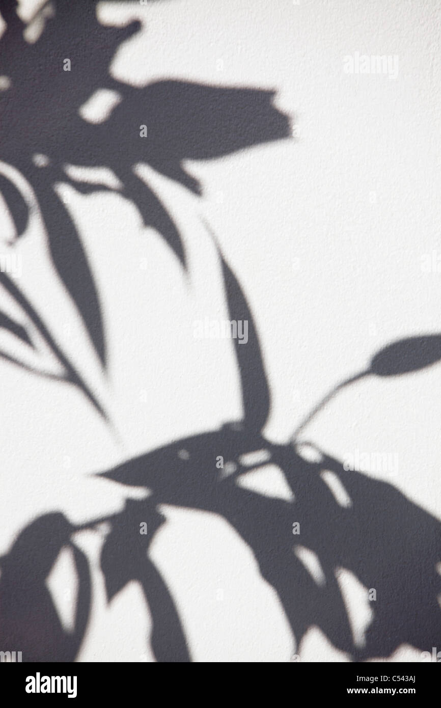 Close-up of a plant shadow on a wall - Stock Image