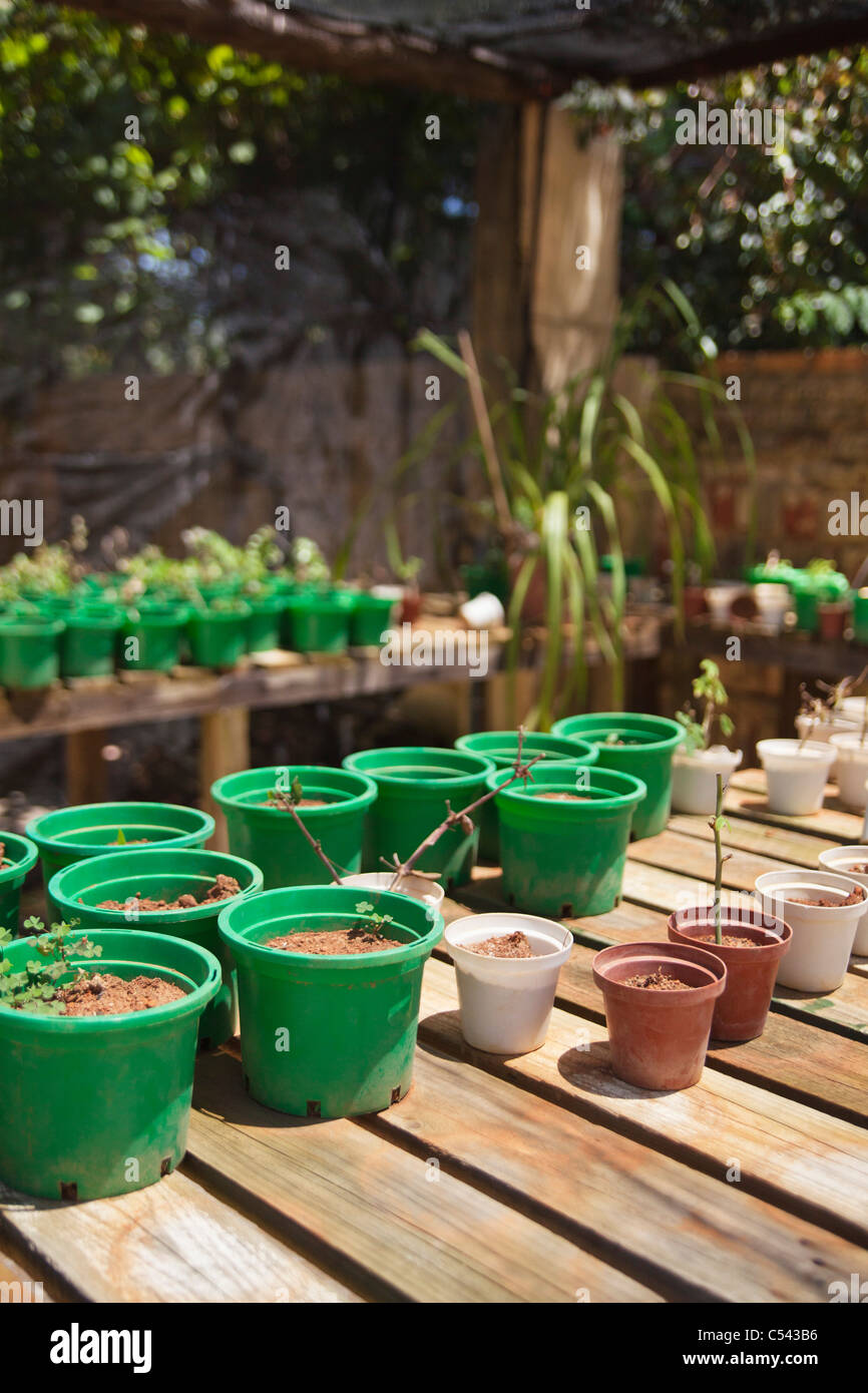 Flower pots on wooden planks - Stock Image