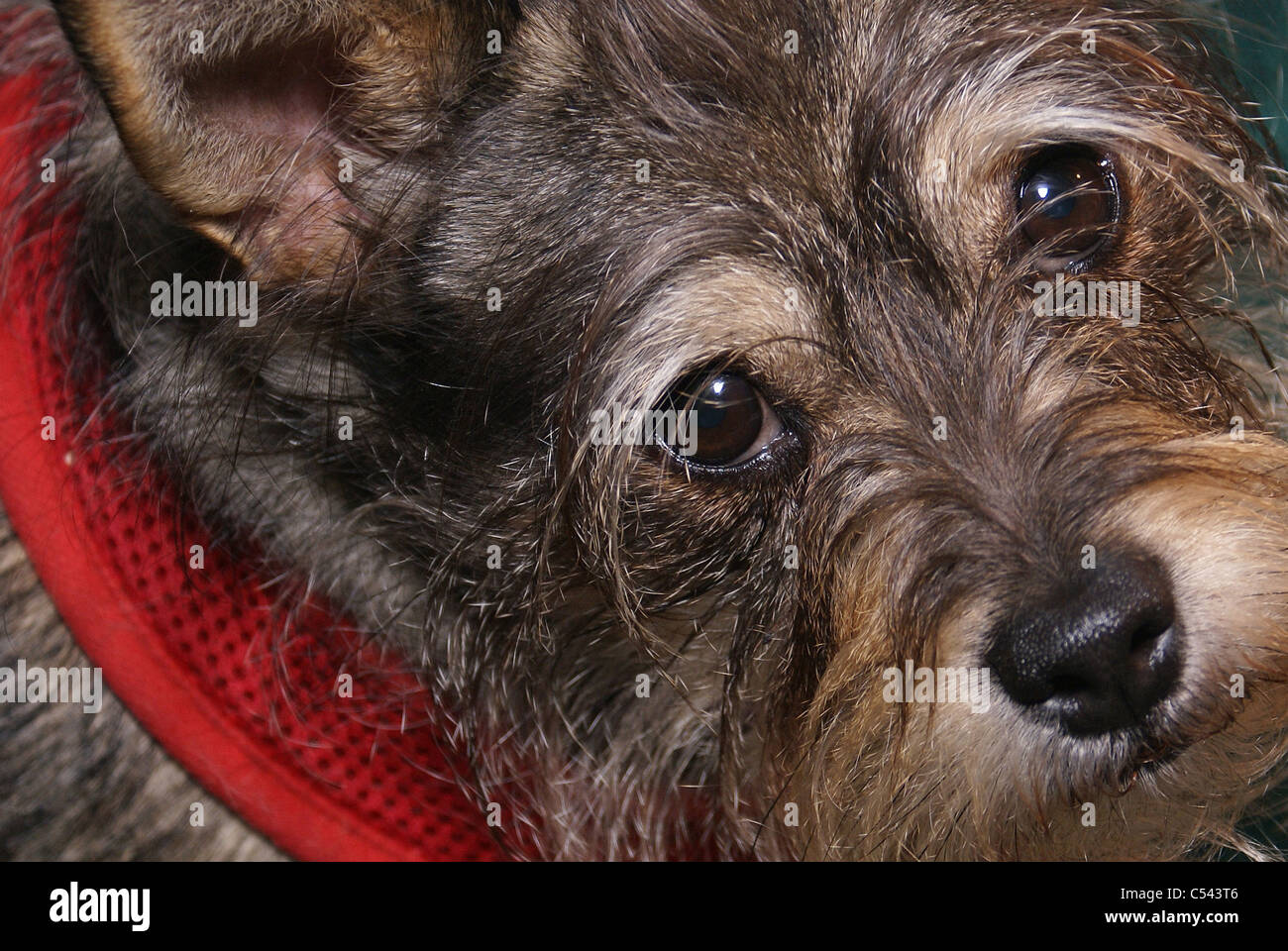 Cute dog face - Stock Image