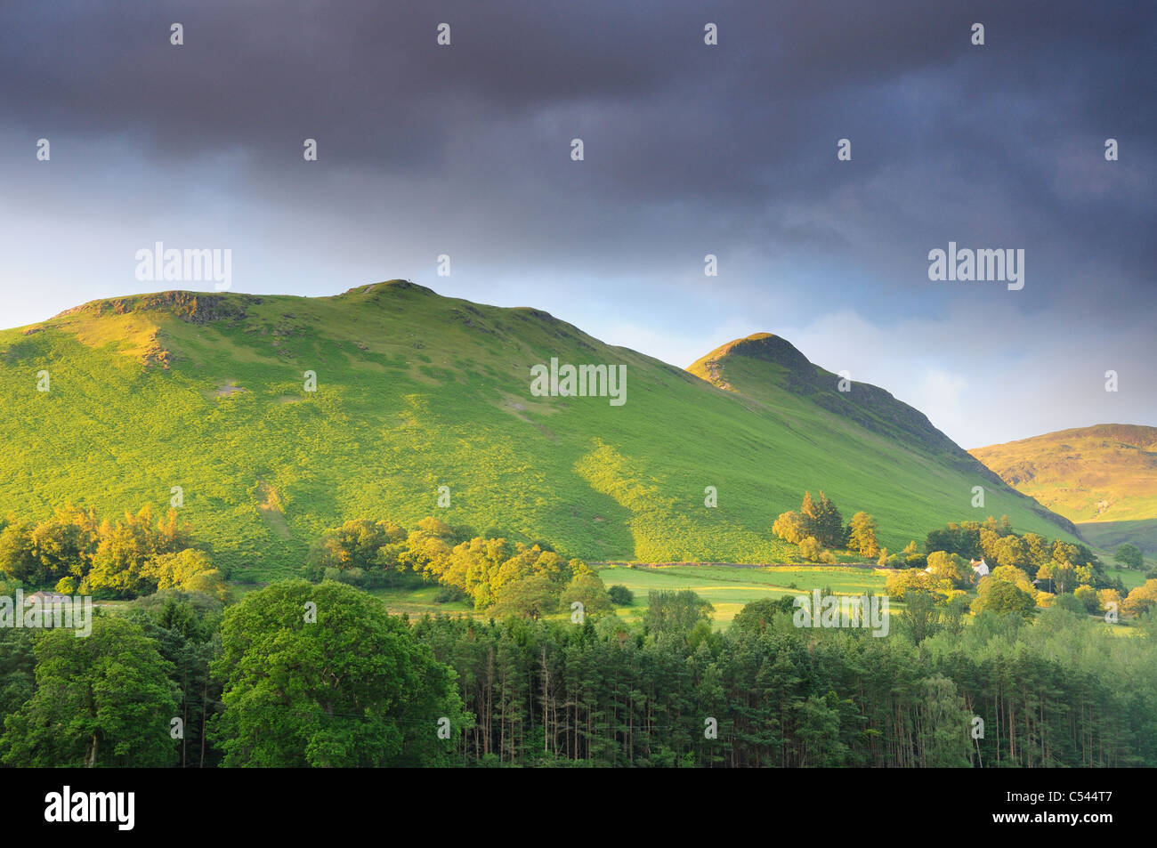 Cat Bells and Skellgill Bank in golden morning summer sunlight in the English Lake District - Stock Image