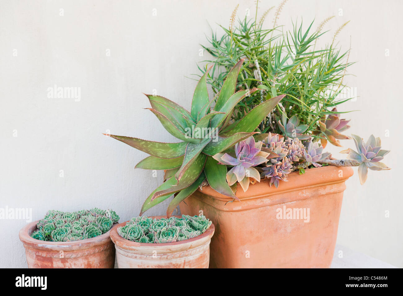 Close-up of potted plants - Stock Image
