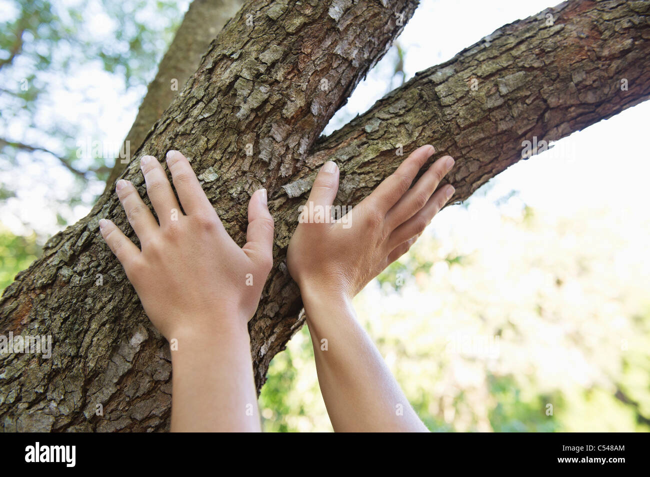 Close-up of a human hand touching tree branch - Stock Image