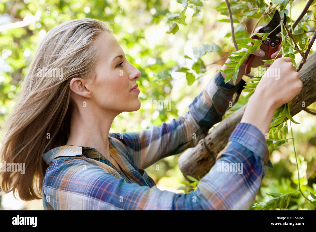 Young woman pruning plants Stock Photo