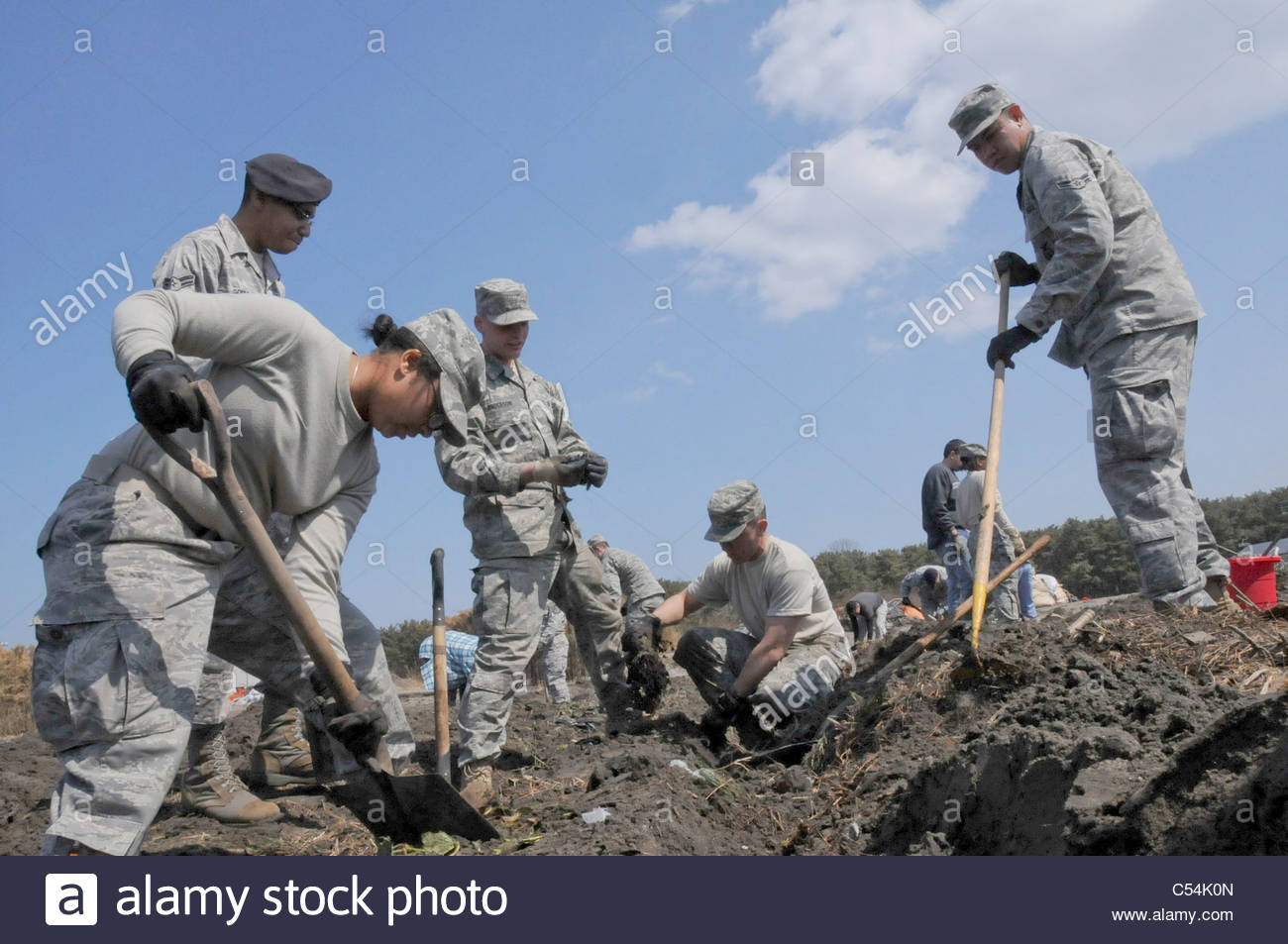 Airmen uncover rows of strawberries April 1, 2011, at a farm in Hachinohe, Japan. - Stock Image