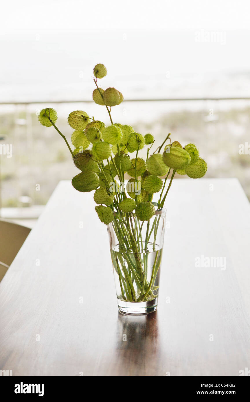 Plant in a glass - Stock Image