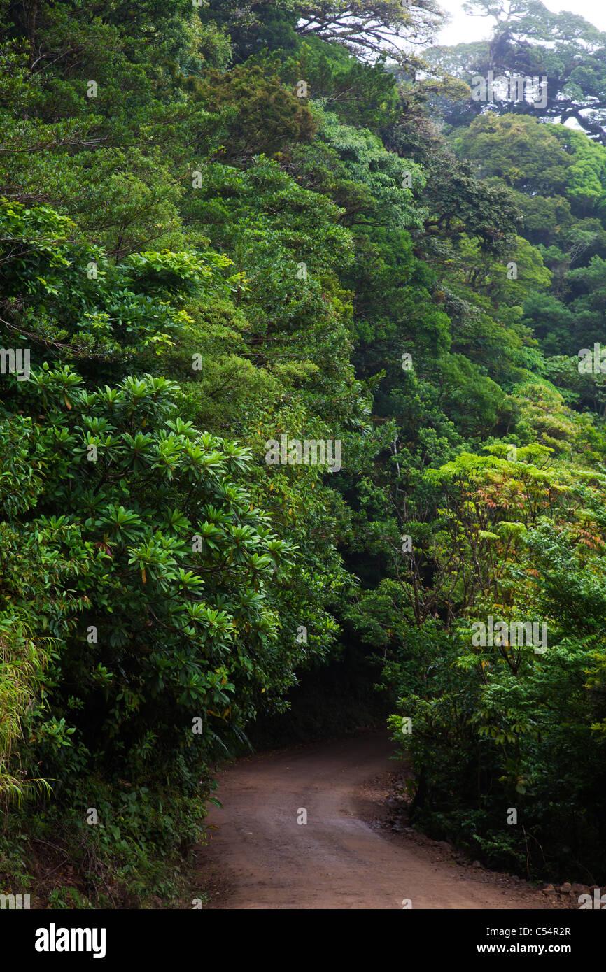 Road in nationalpark Monteverde Costa Rica - Stock Image
