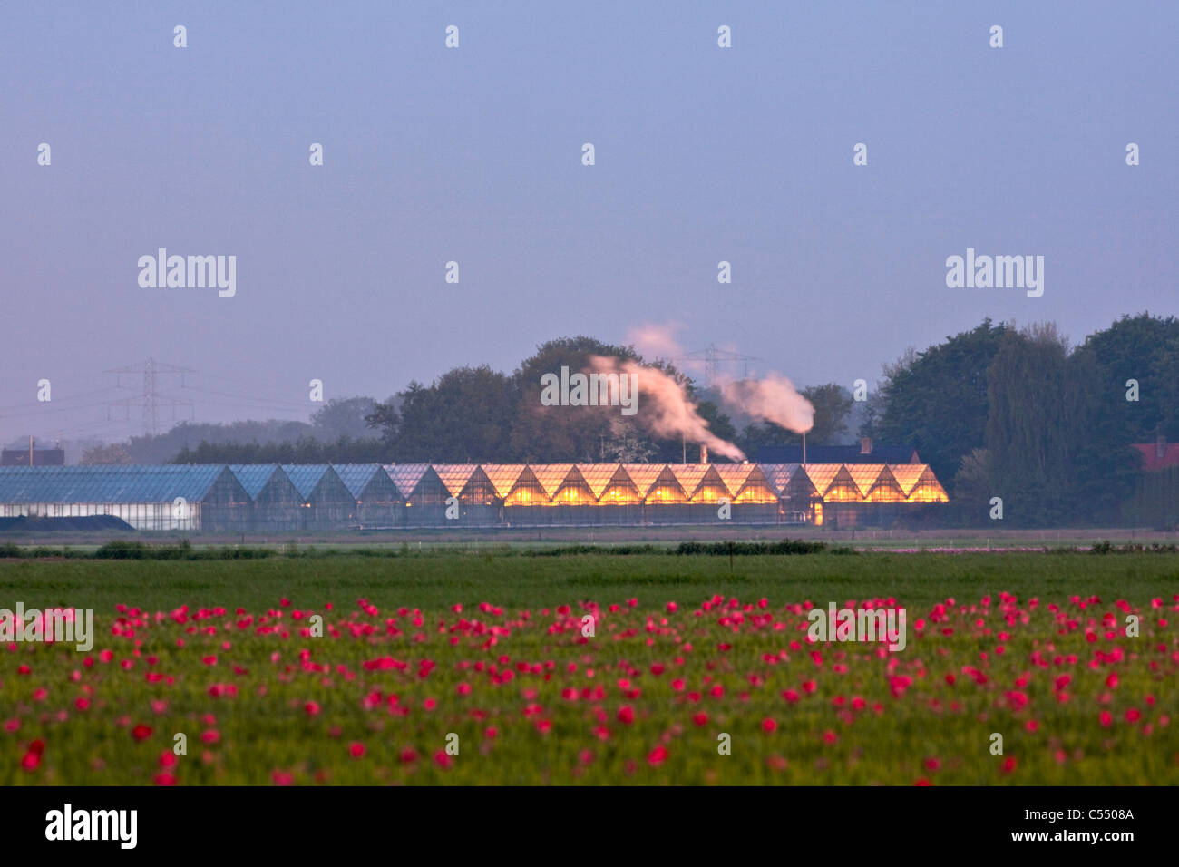 The Netherlands, Marknesse, Greenhouses for bulb  and flower culture - Stock Image