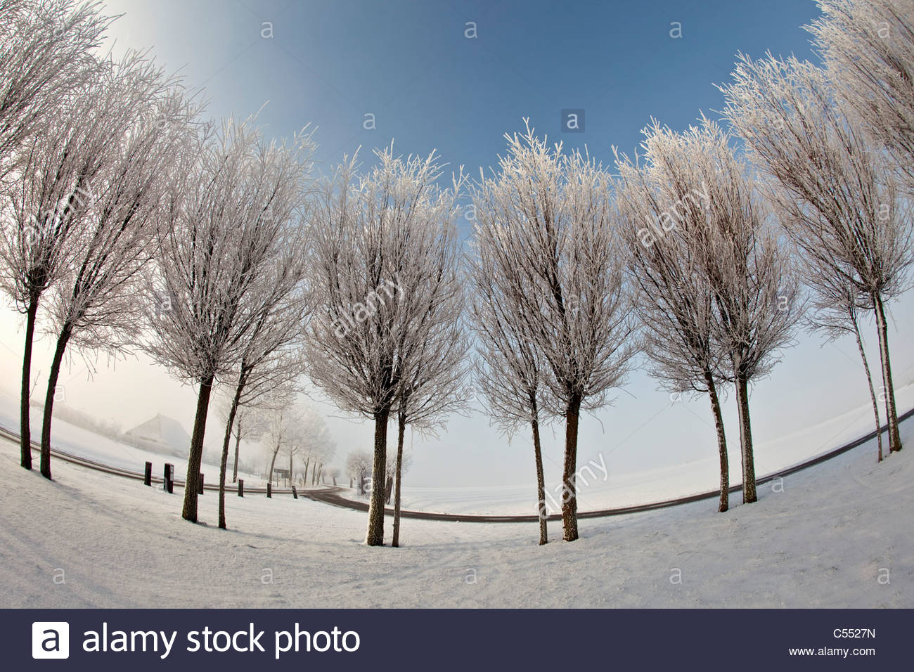 The Netherlands, Ferwoude, Country road and trees in snow and frost. Fish-eye lens. - Stock Image