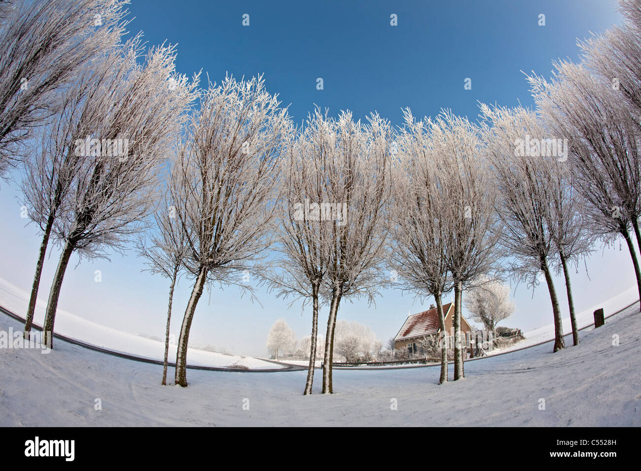 The Netherlands, Ferwoude, Country road and trees in snow and frost. Fisheye lens. - Stock Image