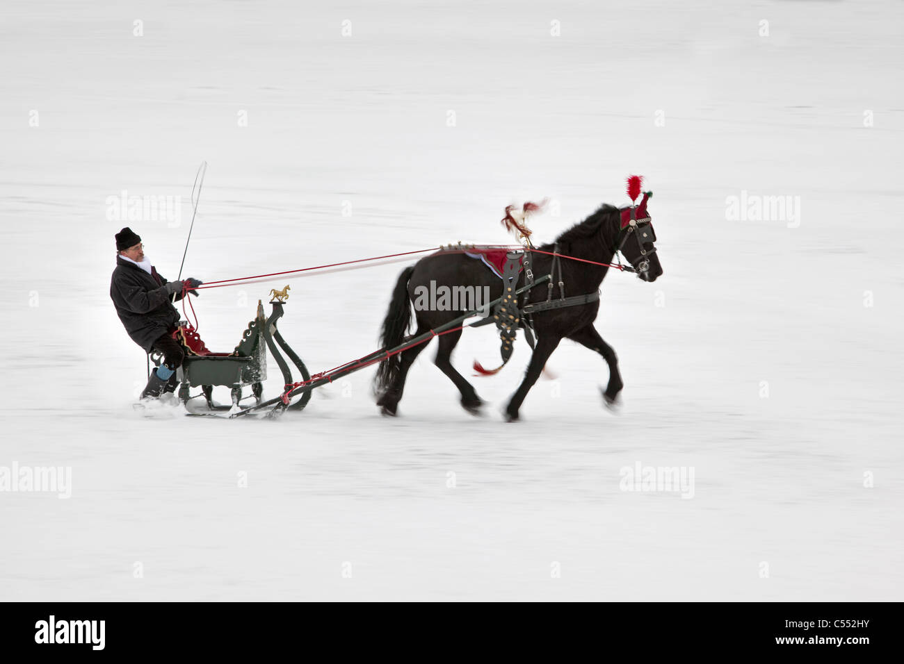 The Netherlands, Witmarsum, Antique horse sledge and Friesian horse. - Stock Image
