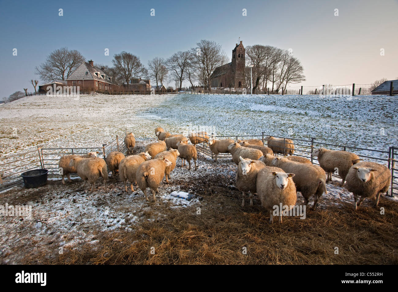 The Netherlands, Hogebeintum, Church on mound and sheep  in snow. - Stock Image
