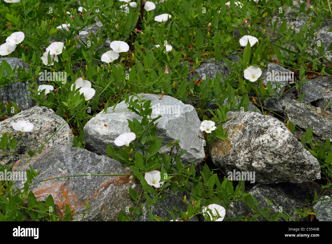 Small White Flowers Stock Photos Small White Flowers Stock Images