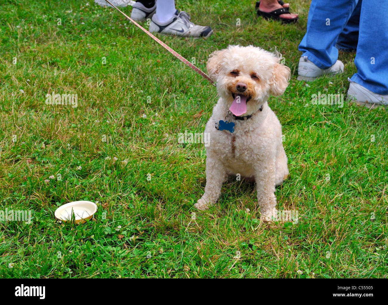 Dog On Leash With Small Water Bowl On Grass So Healthy Happy