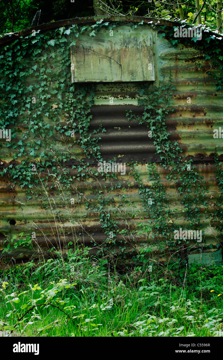 Old rusted shed covered with ivy - Stock Image