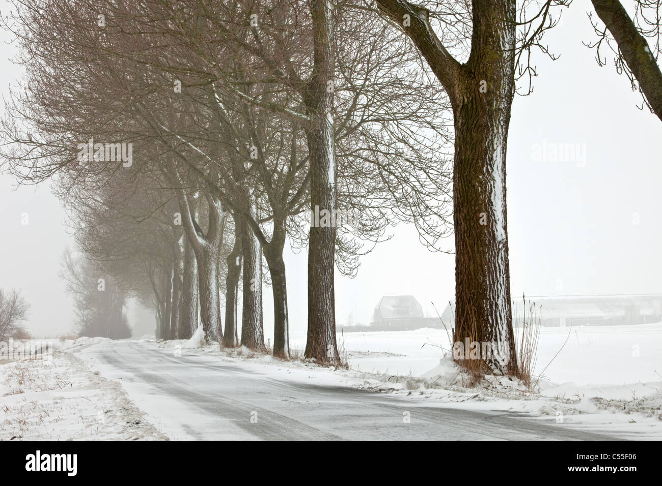 The Netherlands, Garrelsweer, Trees in snow along country road. - Stock Image