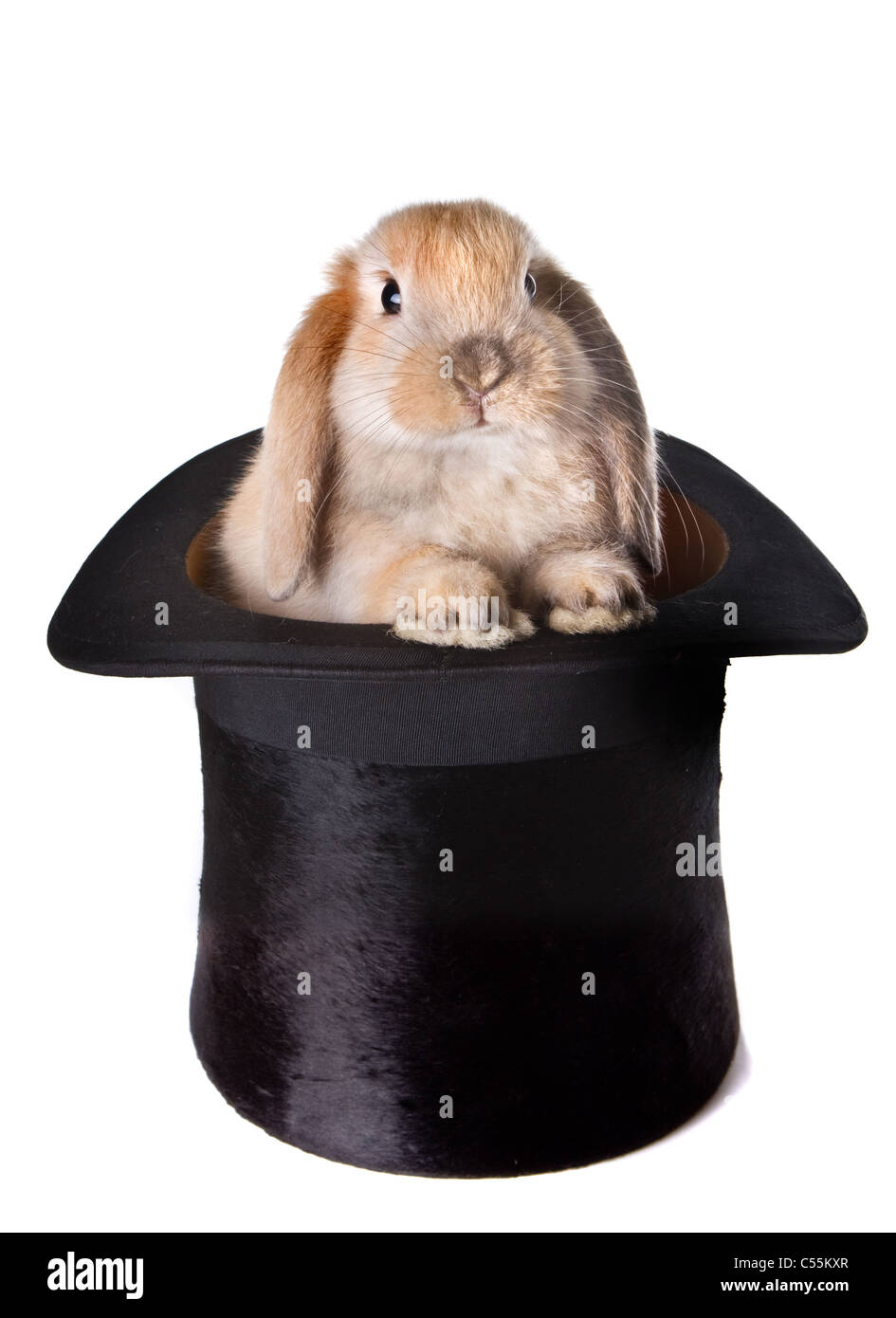 Little easter bunny as a surprise in a top hat - Stock Image