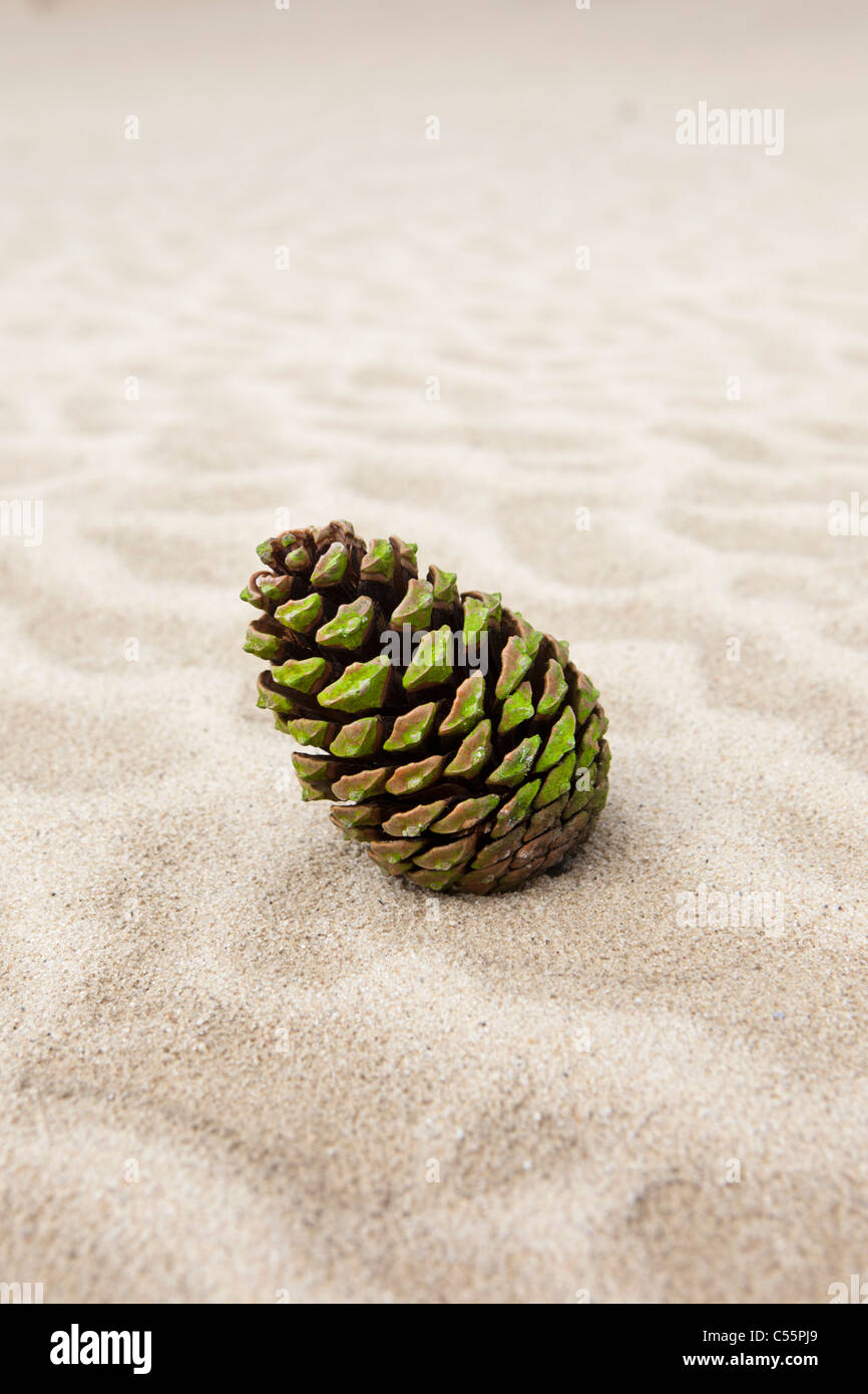 The Netherlands, Loon op Zand, National Park De Loonse en Drunense Duinen. Fir cone in sand. - Stock Image