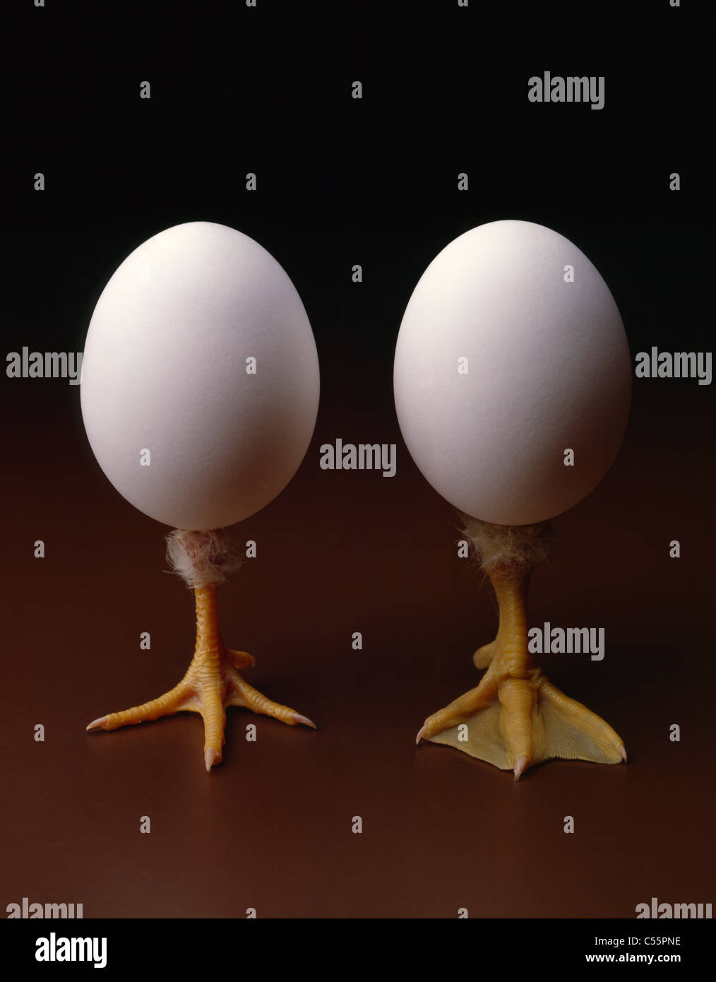 Duck egg and chicken egg with legs coming out on brown background, studio shot - Stock Image
