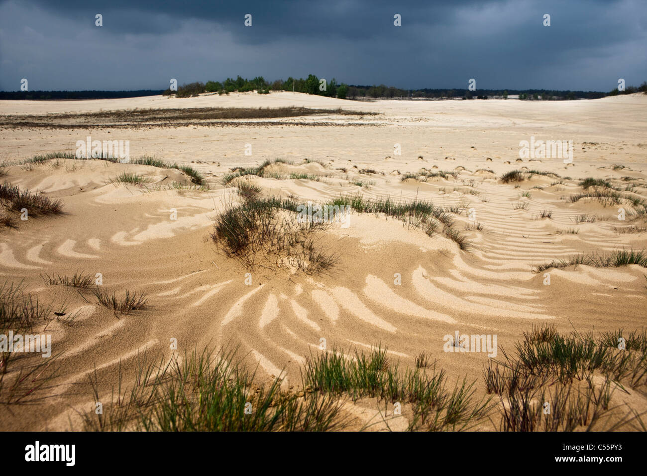 The Netherlands, Loon op Zand, National Park De Loonse en Drunense Duinen. Sand landscape. - Stock Image
