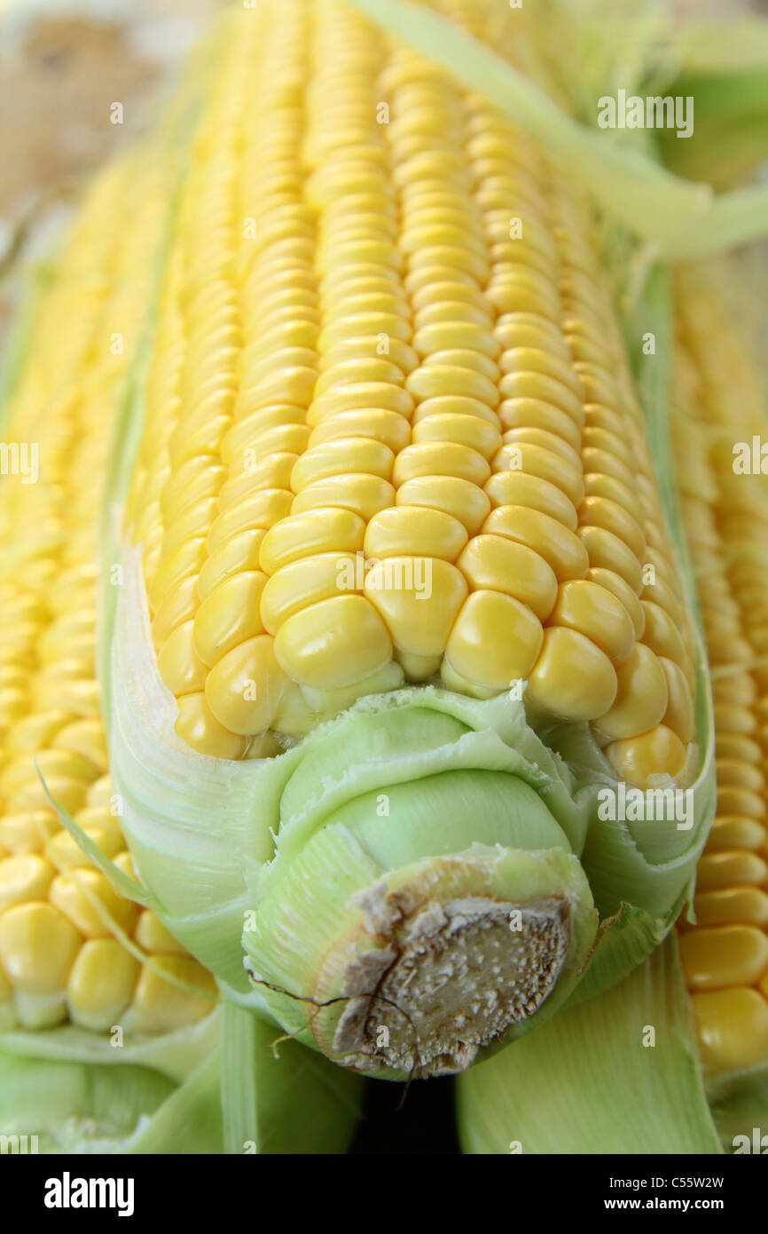 Closeup of yellow corn with additional ears of corn in the background - Stock Image