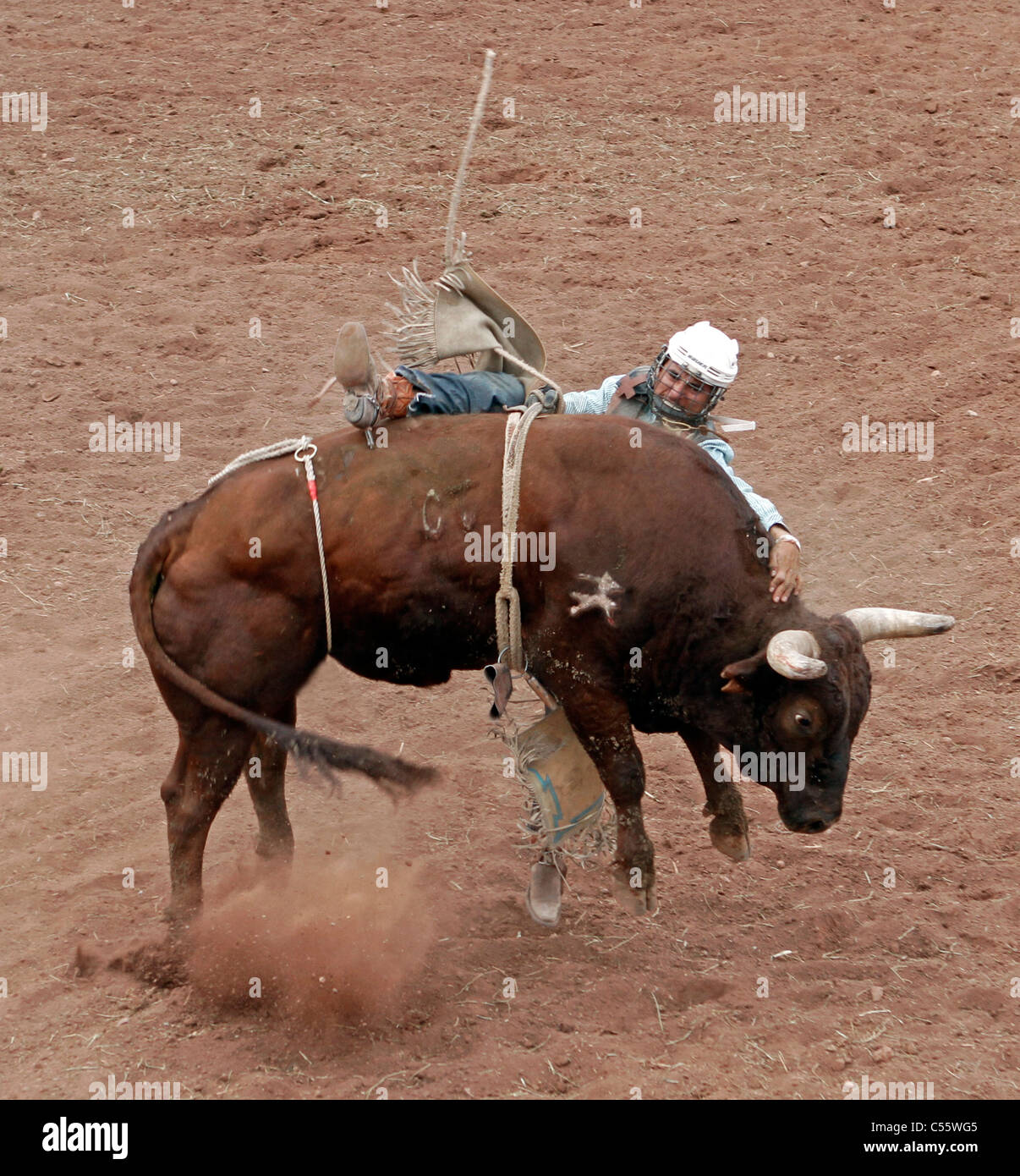Competitor falling during the bull riding event at the Annual Indian Rodeo held in Mescalero, New Mexico. - Stock Image