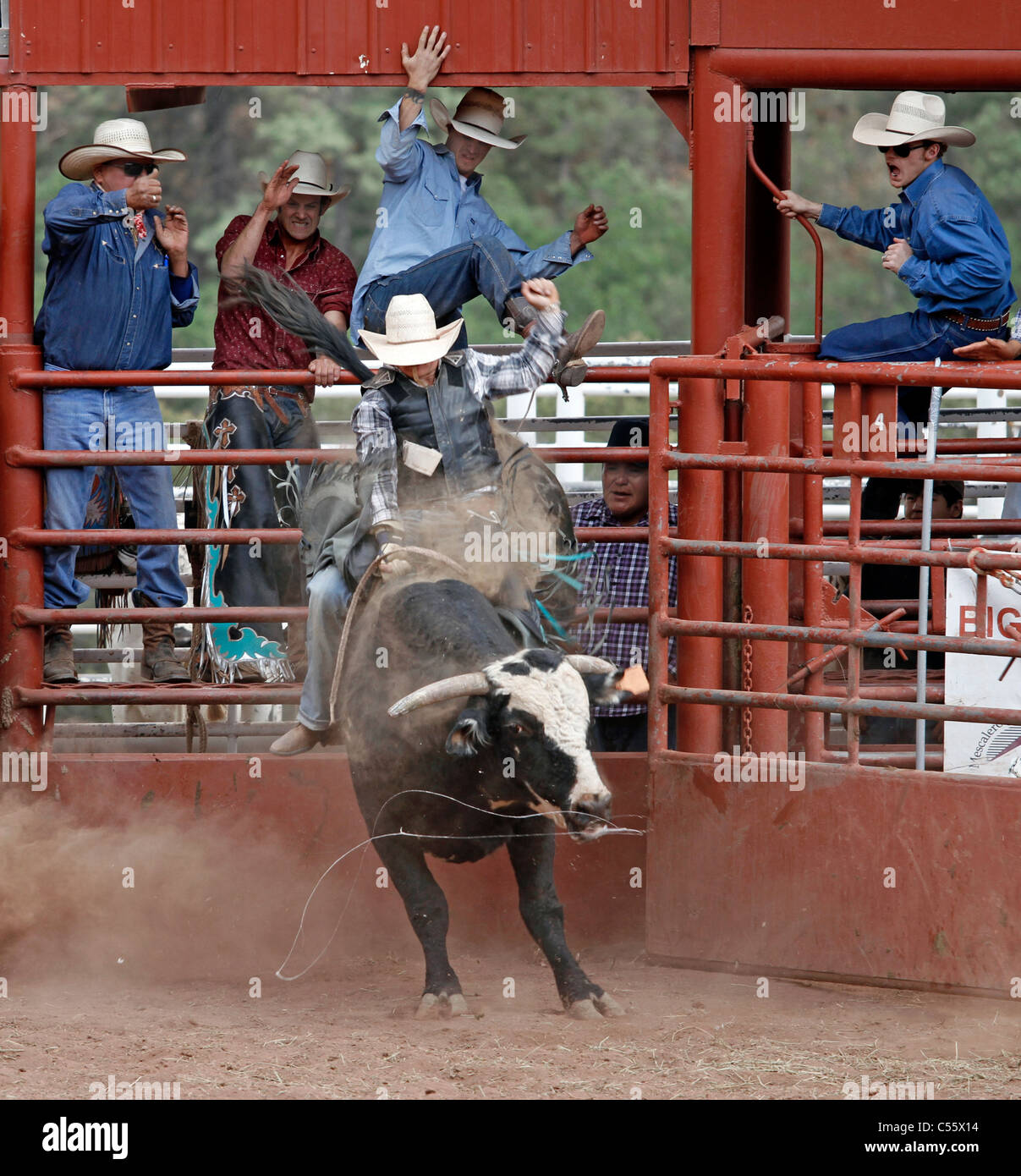 Rodeo Bull Stock Photos Amp Rodeo Bull Stock Images Alamy