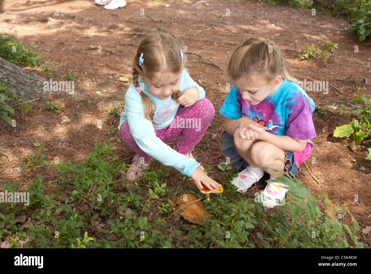 8 year old girls studying a mushroom at Tully Lake Campground, Royalston, MA - Stock Image