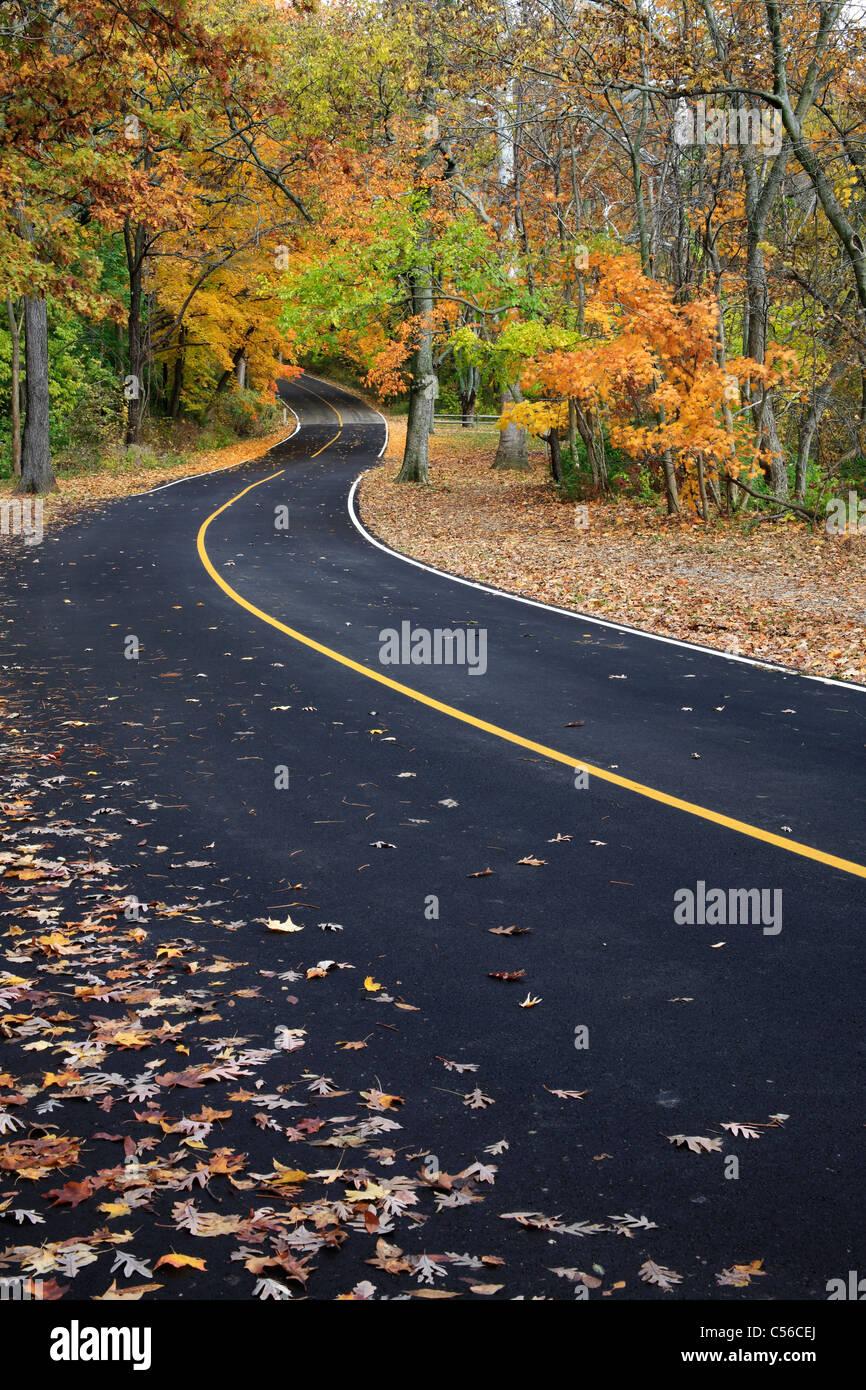 A Curvy Blacktop Road Through The Park In Autumn, Sharon Woods, Southwestern Ohio, USA Stock Photo