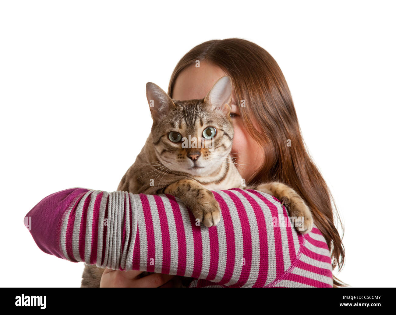 Bengal cat sits on shoulder of young woman and stares at camera in isolated studio shot showing love between pet Stock Photo
