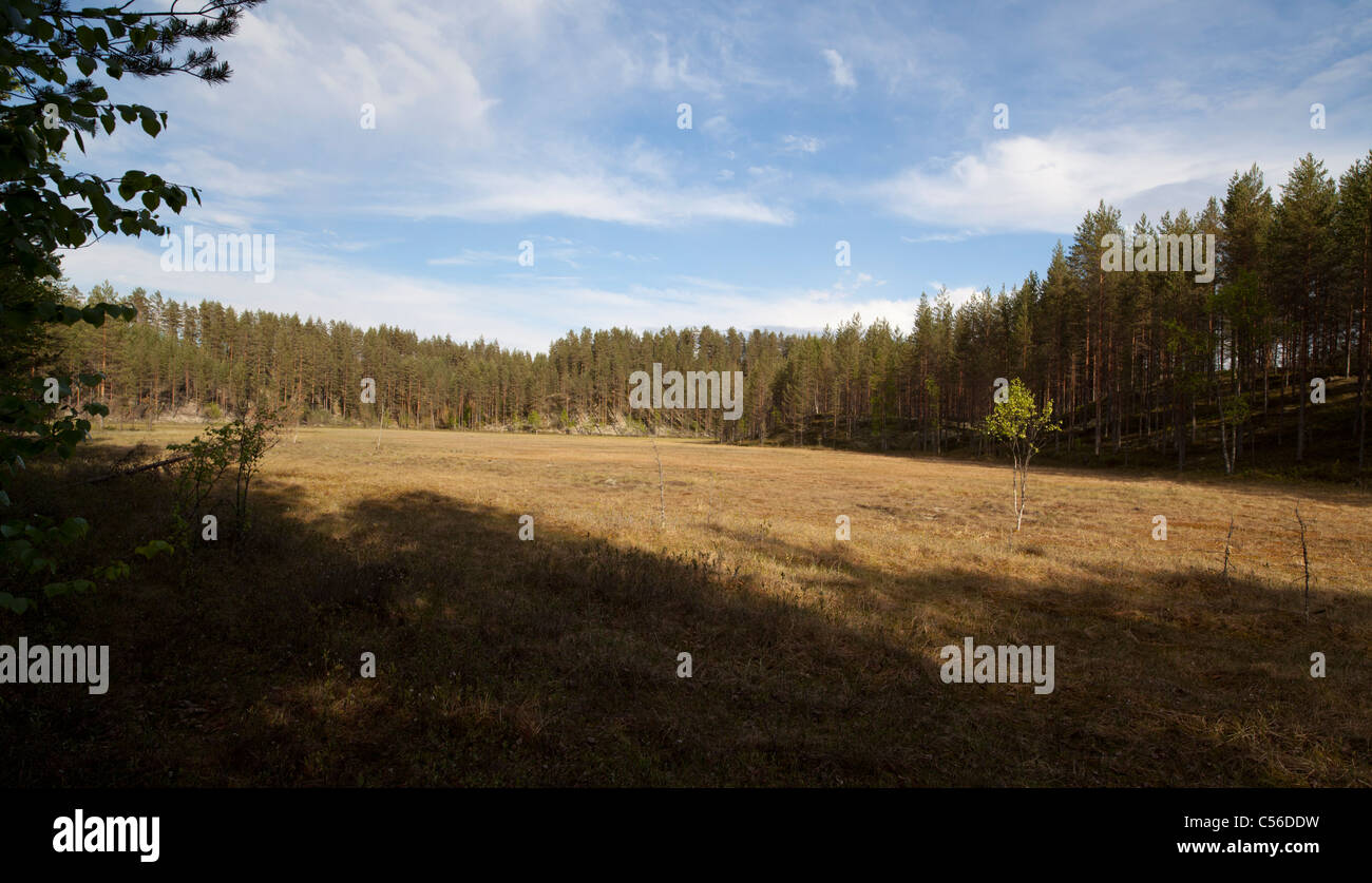 Swamp in the middle of glacial esker ridges . Was formerly a small lake but is now overgrown and turned into a swamp - Stock Image