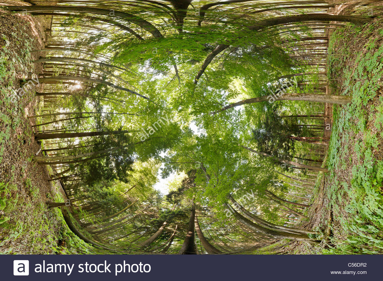 Carolinian Forest showing canopy, understory, and floor, in Rouge National Park an urban wilderness in Toronto Ontario - Stock Image