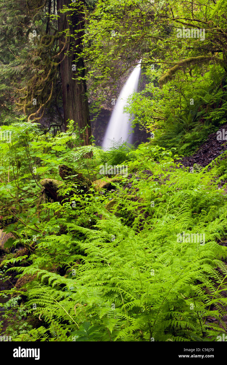 Upper Latourell Falls, Guy W. Talbot State Park, Columbia River Gorge National Scenic Area, Oregon - Stock Image