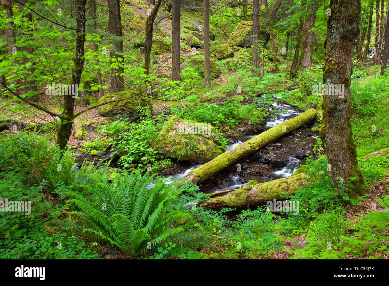 Starvation Creek, Starvation Creek State Park, Columbia River Gorge National Scenic Area, Oregon - Stock Image