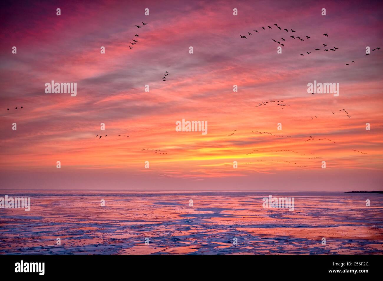 The Netherlands, Oosterdijk, Winter, snow, view on frozen lake called IJsselmeer. Sunrise. Geese foraging. - Stock Image