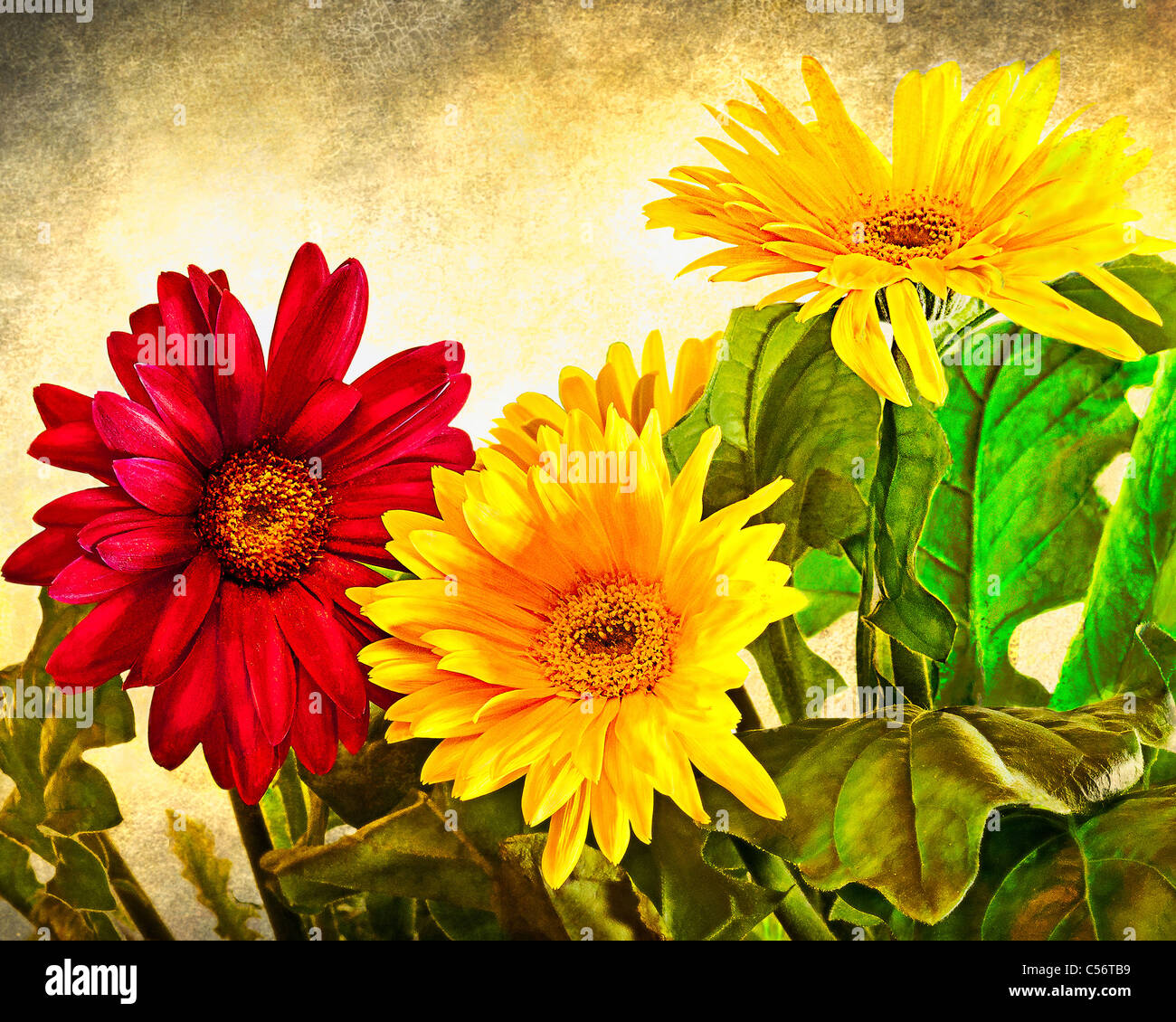Red and Yellow Flowers with Antiqued Background - Stock Image