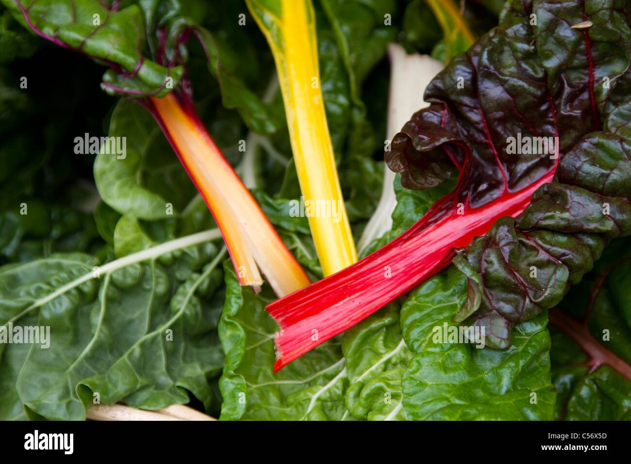 Rainbow chard for sale at Winchester Farmers Market, Hampshire Stock Photo