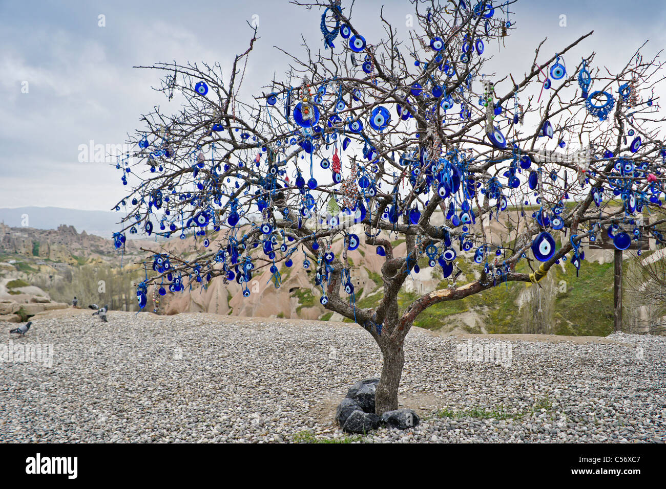 tree full of evil eye charms nazar pigeon valley