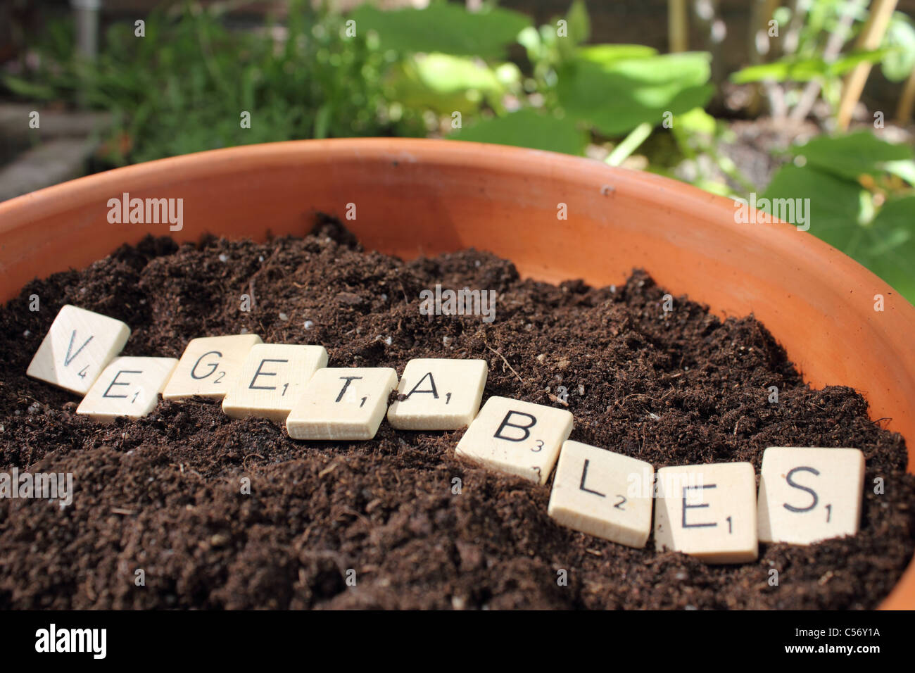 the word vegetables in a pot wit earth - Stock Image