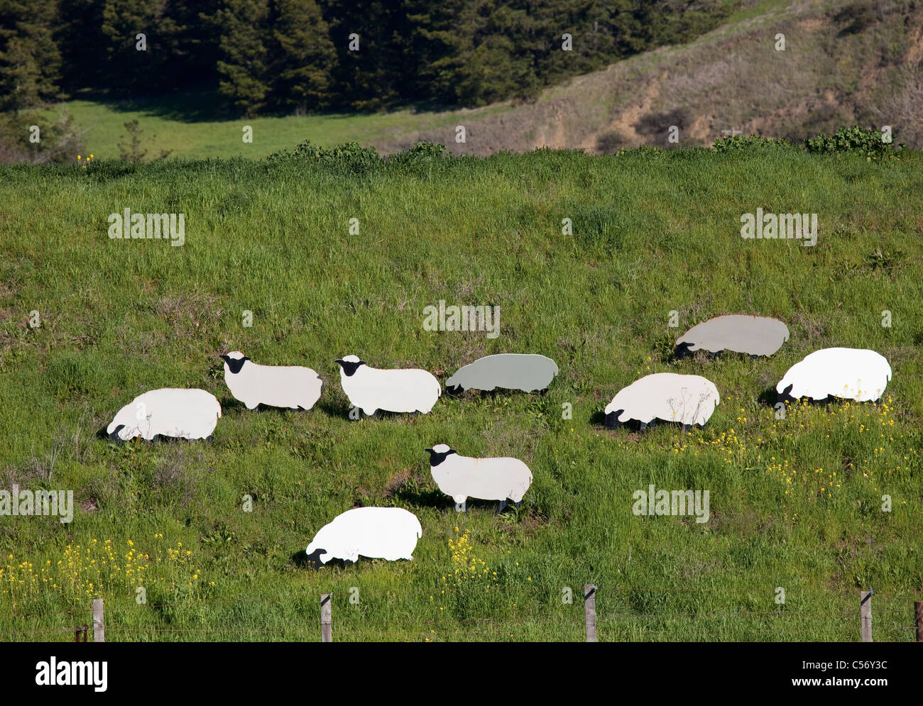 Metal cutouts of white sheep and pigs with black faces among yellow mustard flowers on grass-covered hillside in - Stock Image